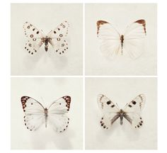 Butterfly Photos - Wings - Nature Photography , Four 5x5 fine art prints in neutral beige and brown, Winter White. $30.00, via Etsy.