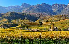"Caldaro (Kaltern) on ""The Wine Road"""