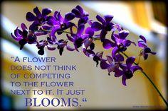 Just bloom.