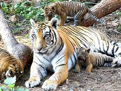 Bornadi Wildlife Sanctuary - in Assam, India