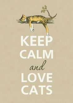 Keep calm and love cats - this my new motto - who would have ever guessed I would become a crazy cat lady? Crazy Cat Lady, Crazy Cats, I Love Cats, Cool Cats, Animals And Pets, Cute Animals, Small Animals, Jungle Animals, Baby Animals
