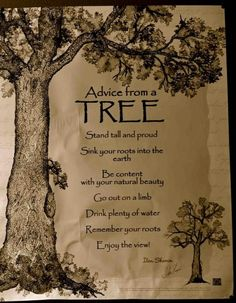Advice from a tree | Asas da Informação | O mundo conectado