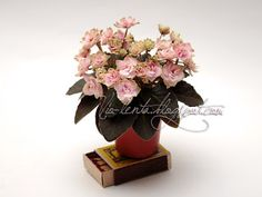 Jolly Imp (H.Pittman) Double pink/green edge. Medium green, plain. Miniature. Махровые розовые цветы с зеленой каймой. Зеленая ровная листва. Миниатюра.