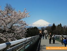 Another Mount Fuji View from Gotemba Premium Outlets Japan Travel Guide, Tokyo Travel, Asia Travel, Travel Guides, Travel Advice, Travel Tips, Go To Japan, Japan Trip, Japan Summer