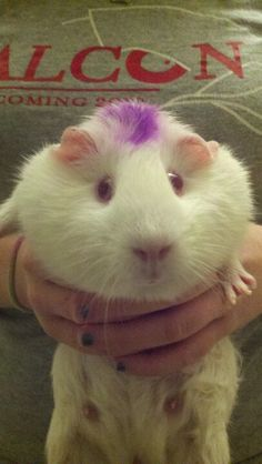 Miley Cyrus transformed into a guinea pig. I can tell by the mohawk.