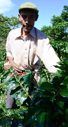 Casa Hogar Coffee: From the harvesters to those enjoying the coffee in the United States and beyond, everyone benefits. The harvesters and farmers receive a fair wage, GCLA and other charities receive funding and those buying the coffee enjoy a great Honduran coffee!