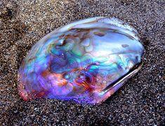 iridescent oyster shell