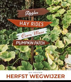 Autumn Diys, Fall Diy, Corn Maze, Diy Patches, Pumpkin, Herbs, Pumpkins, Herb, Squash