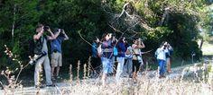 Algarve assume-se como local privilegiado para observação de aves e turismo de natureza