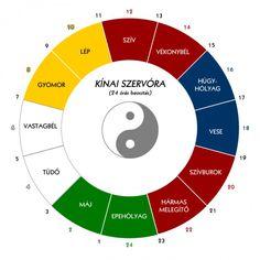 Szerv-óra, ami megmutatja, hogy a 12 fő szervünk mikor aktív! Aktiv, Spiritual Life, Acupressure, Alternative Medicine, Naha, Reiki, Health And Beauty, Coaching, Spirituality