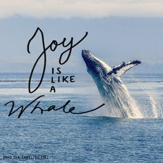 """My picture of joy ... is whale-like girth continuing to head toward the stars. So even in May, when joy feels like jumping when you weigh 40 tons, keep leaping!"" 
