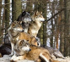 Love all the beautiful colors in their coats!