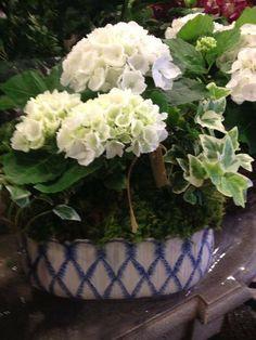 Lovely Hydrangeas!