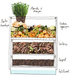 Garden organic waste is most efficiently recycled in compost heaps and there are many benefits to it. Here is how to start a compost heap in your garden. Bonsai Seeds, Tree Seeds, Garden Compost, Vegetable Garden, Diy Compost Bin, Compost Tea, Permaculture, Herb Planters, Planter Garden