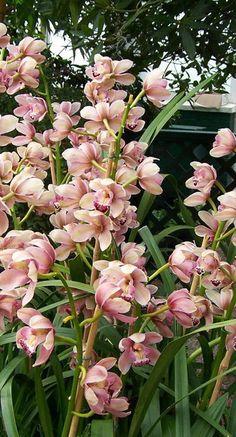 Voor een ticket to the tropics hoef je niet ver: de Orchideeënhoeve is een overdekte tropische wereld, gewoon in onze oer-Hollandse Flevopolder. Je loopt er rond door fraaie tropische tuinen, door de Vlinder Vallei en de kwekerij waar je ziet hoe orchideeën gekweekt worden. Een paradijselijke wereld voor jong en oud is het, waar het – oh hulde - altijd mooi weer is.