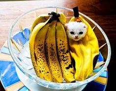 Gattini voglio più gattini con banane per promuovere post esotici