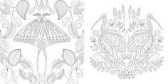 Millie Marotta's Tropical Wonderland: A Colouring Book Adventure: Millie Marotta: 9781849942850: Amazon.com: Books