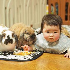 今日も仲良くにんじん散らかす娘とうさぎ🥕 ・ ・ ・ ・  #赤ちゃん #ベビー #かわいい #肉 #女の子 #生後8ヶ月#0歳 #baby #babygirl #cute #育児 #子育て#babystagram #子供 #うさぎ #ロップイヤー #rabbit #rabbitstagram #bunny #ペット #bunbun #bun #pet #pets #petstagram #petsofinstagram #bunnies #bunnystagram #bunnylove #bunniesofinstagram