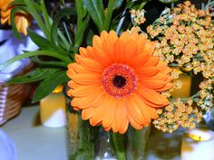 I love this color of gerbera daisy