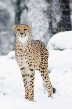 This is a gorgeous animal.