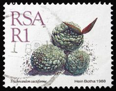 Trichocaulon Cactiforme, Dwarf Succulent Plant, stamp printed in South Africa circa 1988 Cactus, Stamp Printing, Flower Stamp, Stamp Collecting, Planting Succulents, Postage Stamps, Childhood Memories, South Africa, Fishing Cakes