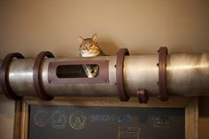 Steampunk #Cat Transit System @theophany Ali Morbid should build one of these