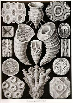 Ernst haeckel '' Origen de la vida''+ Ilustraciones