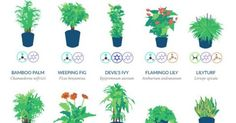 Household plants are for more than just decor: they brighten a room and filter toxic particulates and pollutants from the air. And, when one lives in the city, being in an environment full of oxygen-producing flora is essential for vibrant health and well-being. Thanks to NASA, there are no more questions when it comes to... View Article