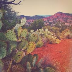 Vintage Nature Photography Wanderlust Road Trips 34 Ideas For 2019 Desert Dream, Desert Life, Desert Days, Wanderlust, Mother Earth, Mother Nature, Wonders Of The World, In This World, Beautiful World