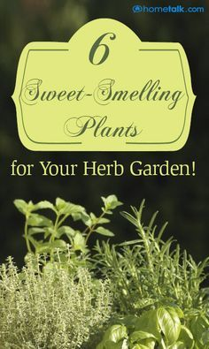 6 Sweet-Smelling Plants for Your Herb Garden!