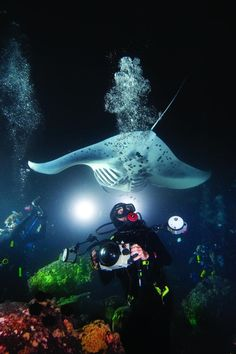"""Night diving is a """"must do"""" for a diver! It's extra awesome if bioluminescent is present!"""