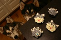 I had a random dream about Husky cupcakes!!!  Had to search and see who's made them! Cute husky cupcakes; should be easy enough to make them mally ones instead!!