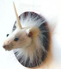 unicorn mouse taxidermy