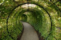 alnwick gardens - tree tunnel