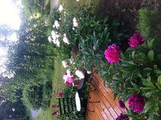 My Peony Garden patio area