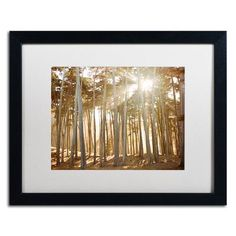 "Trademark Art Presidio Sunset by Ariane Moshayedi Framed Photographic Print Size: 16"" H x 20"" W x 0.5"" D, Frame Color: Brown"