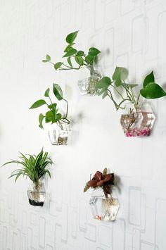Set of 6 empty hexagon glass wall terrarium//wall by NewDreamWorld