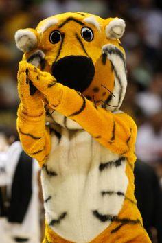 Truman the Tiger proudly represents the University of Missouri as the Mizzou mascot. League Champs, Sports Advertising, Cotton Bowl, Basketball Photos, Missouri Tigers, Kansas Jayhawks, Great Team, College Football, Cheerleading