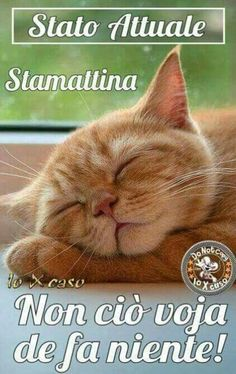 Good Morning Good Night, Good Morning Quotes, Animals And Pets, Funny Animals, Italian Memes, Quotes About Strength, Smiley, Laughter, Funny Quotes
