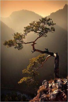 Ideas For Bonsai Tree Photography Beautiful Forest Photography, World Photography, Landscape Photography, Photography Tips, Hiking Photography, Scenic Photography, Aerial Photography, Night Photography, Landscape Photos
