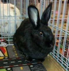 Eclipse #bunnies #adoptdontshop