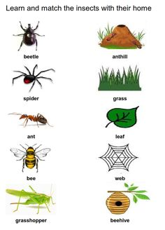 Bug Activities, Preschool Learning Activities, Preschool Lessons, Nursery Rhymes Lyrics, Bug Crafts, Montessori Classroom, Teaching Aids, Toddler Art, Activity Sheets