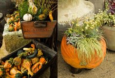 Feeling Fall on The BULLETIN at Terrain #pumpkins #gourds
