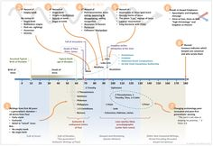 Life Of Jesus Timeline  Google Search  Bible