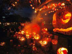 Lots of Jack-O-Lanterns lights nights pumpkin halloween jack o lantern