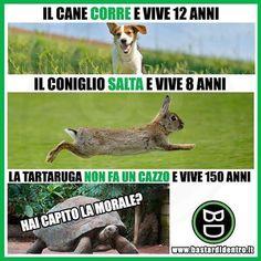 Funny Video Memes, Funny Jokes, Hilarious, Funny Images, Funny Photos, Doh Vinci, Funny Animals, Cute Animals, Italian Memes