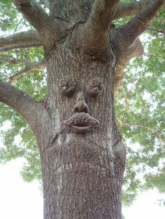 1000 Images About Tree Faces On Pinterest Tree Faces