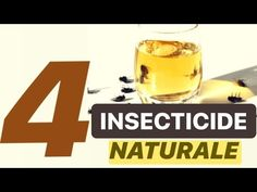 (31) CUM SCAPI DE MUSTE SI TANTARI CU INSECTICIDE NATURALE - YouTube Tableware, Youtube, Avocado, Natural, Agriculture, Dinnerware, Lawyer, Tablewares, Place Settings