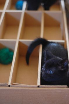 "Kitties are born with the ""if it's a box..."" gene."