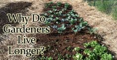 This makes a LOT of sense! - Why Gardening can Help You Live Longer and Be Healthier   Wellness Mama